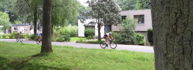 Manicured garden criterium